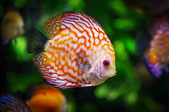 Cómo elegir un acuario para tus peces
